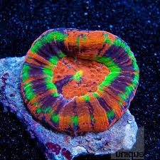 Floating Aquascape Reef2reef Saltwater And Reef Aquarium Forum - 98 best marine inverts images on pinterest saltwater aquarium