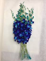 blue dendrobium orchids blue dendrobium orchids