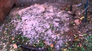 organic garden 010 killing fire ants youtube