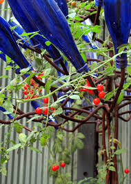 how to trellis plants gardens and bottle trees