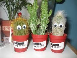mini cactus garden ideas the great cactus garden ideas u2013 three
