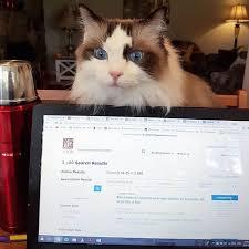 cats afterpains 16daystogo смотреть онлайн и бесплатно узнать что это за хэштег