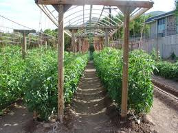 mittleider method gardening this is the method we used in az
