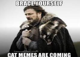 Brace Yourself Memes - best 25 brace yourself meme ideas on pinterest cat love hug