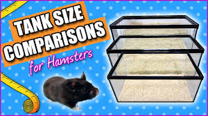 tank size comparisons for hamsters youtube