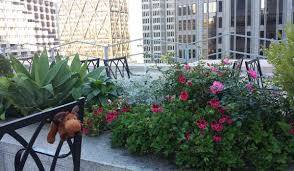 San Francisco Flower Garden by Discovering San Francisco Secret Gardens And Secluded Public Open