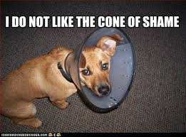 Bad Dog Meme - cone of shame i has a hotdog dog pictures funny pictures of