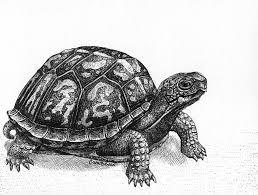 coloring page graceful drawings of turtles sea turtle baby
