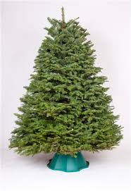 3 5 to 4 ft noble fir tree green valley