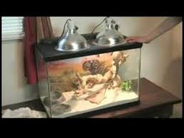 keeping a bearded dragon ultraviolet lights for reptile