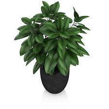 plant in black pot by cgaxis 3docean