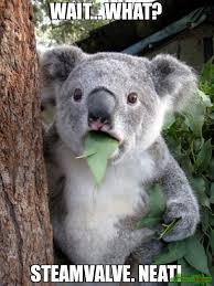 Neat Meme - wait what steamvalve neat meme surprised koala 82347