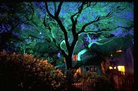 Landscape Tree Lights Gallery 2 15 Jpg