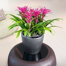 Plants For Office Eco Green Office Plants Stunning Indoor Plant Displays