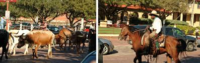Texas how far can a horse travel in a day images Kid 39 s day out in cowtown visting the fort worth stockyards with jpg