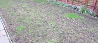 greensleeves lawn care blog winter gardening tips u0026 advice