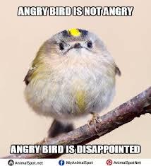 Meme Bird - bird memes