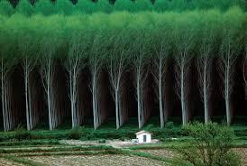 made forest tree farm rebrn