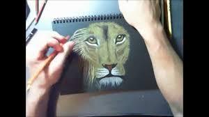 lion drawing coloured pencil black paper