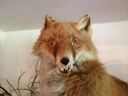 Taxidermy Fox Meme - bad taxidermy fox google search grandmas austerity of love