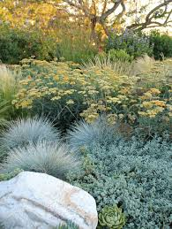 Backyard Plants Ideas 5 Drought Tolerant Landscaping Ideas For A Modern Low Water Garden