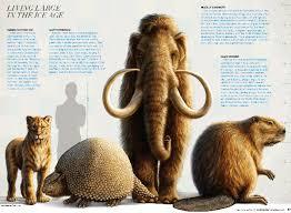 animals big answers genesis