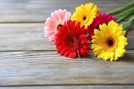 bulk flowers 4 tips for keeping bulk flowers fresher longer