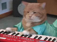 Cat Playing Piano Meme - funny cat meme gifs search find make share gfycat gifs