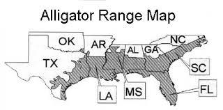 alligators in map alligators where to see wildlife