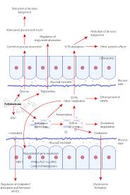 polydextrose in lipid metabolism intechopen