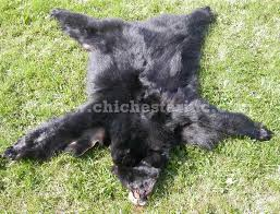 Bare Skin Rug State Regulations On Sale Of Bear Skins Tanned And Grizzly Bear