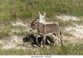 South Dakota wild animals images South dakota animals stock photos south dakota animals stock jpg
