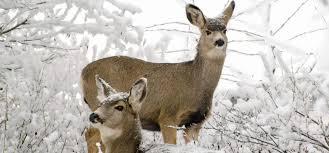 wildlife help topics bc spca