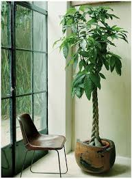 best 25 tall indoor plants ideas on pinterest big plants