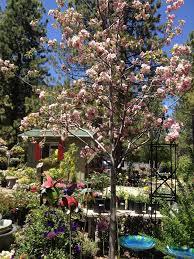 tahoe tree company inc garden center tahoe city california