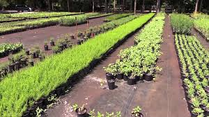 native plant nurseries green isle gardens a florida native plant nursery youtube