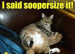 Fat Cat Meme - soopersize meh lolcats lol cat memes funny cats funny