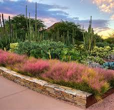 Garden Botanical Desert Botanical Garden