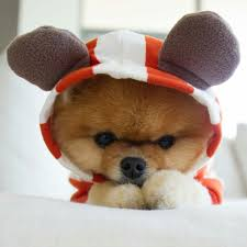 dog in costume cute animals dog puppy pets dog costumes