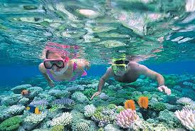 Wyoming Snorkeling images Swimming with the fishes in australia goway jpg