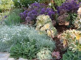 california native drought tolerant plants exterior ideas native drought tolerant plant choose the right