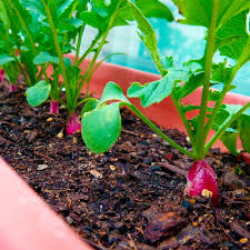 tips on growing home grown vegetables when to plant a vegetable