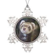 639 best bandit snowball images on ferrets