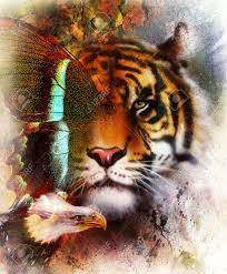 tiger with eagle and ornamental mandala and butterfly wildlife