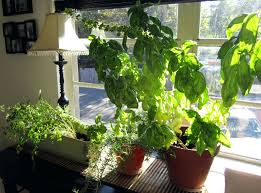 indoor herb garden wall how to make an indoor herb garden wall ideas planters