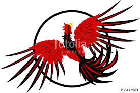 rooster fight stock image and royalty free vector files on