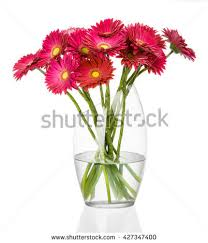 Flowers In A Vase Images Beautiful Red Dahlia Flowers Vase Isolated Stock Photo 523705438