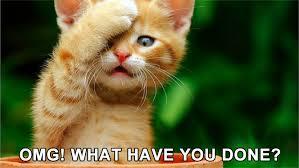 Omg Cat Meme - cat memes meow aum part 19