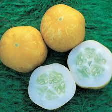 buy cucumber cucumis sativus u0027crystal lemon u0027 cucumber u0027crystal