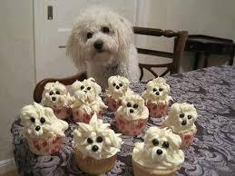 dog birthday cake schnoodle cupcakes recipes dog birthday cakes dog